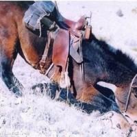 Лошади – не только «животное-жертва» - фото 3_wm-200x200, главная Интересное о лошади Новости Разное , конный журнал EquiLIfe