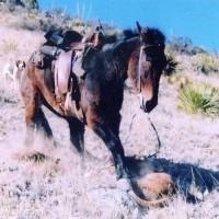 Лошади – не только «животное-жертва» - фото 4_wm-200x200, главная Интересное о лошади Новости Разное , конный журнал EquiLIfe