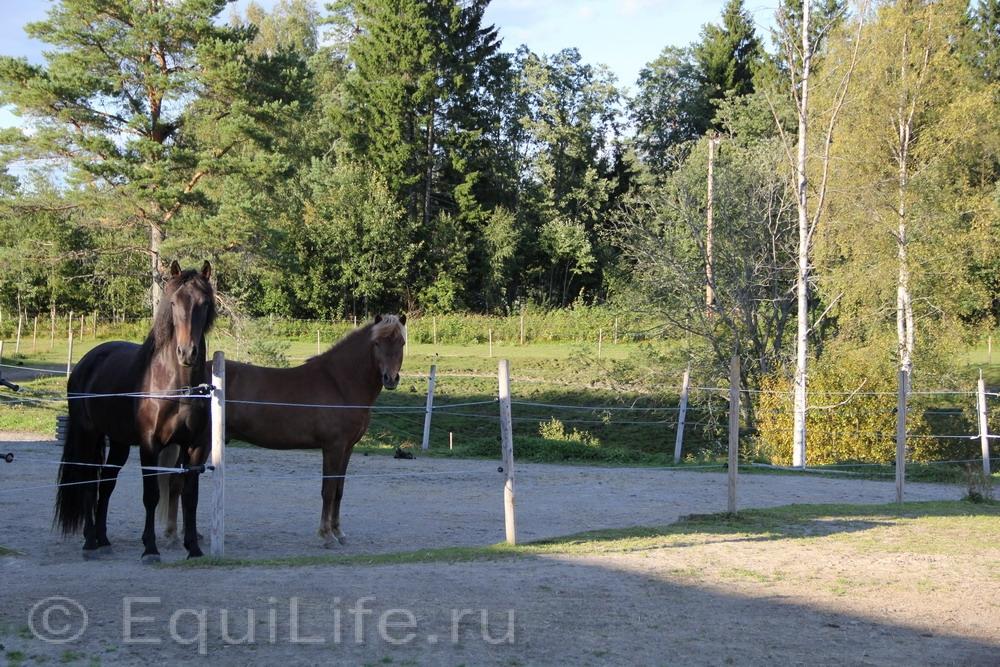 Фоторепортаж: Конюшня на юге Норвегии - фото IMG_4581_wm, главная Конюшня Пастбище Содержание лошади , конный журнал EquiLIfe