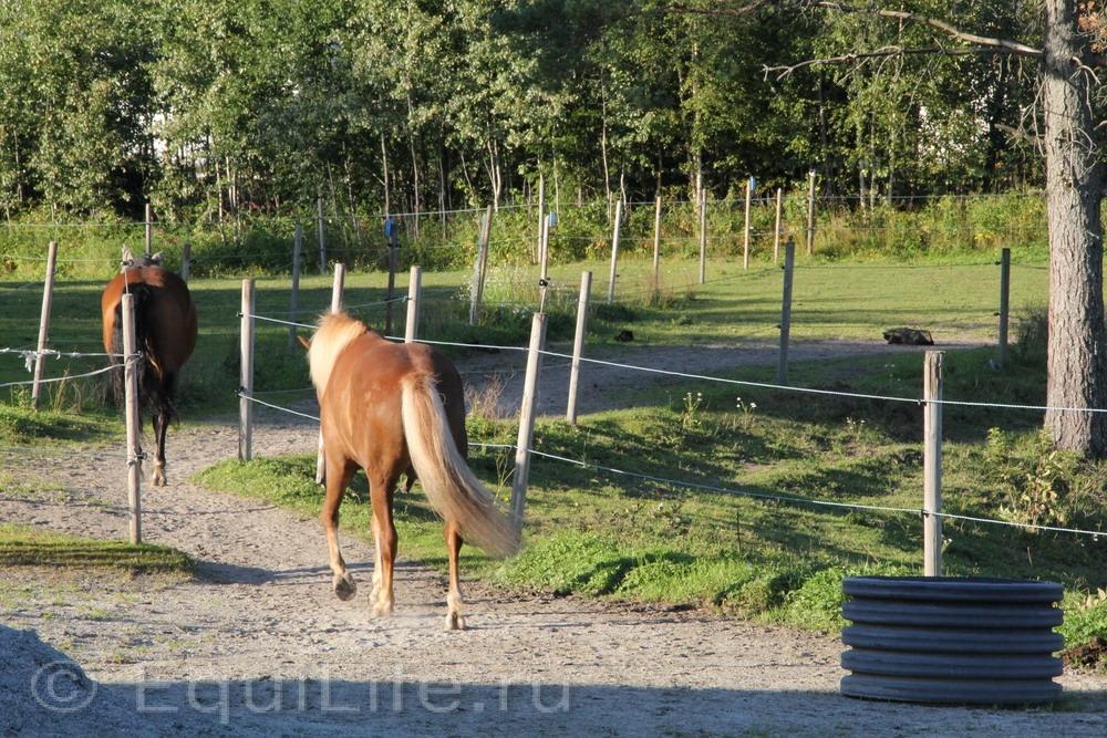 Фоторепортаж: Конюшня на юге Норвегии - фото IMG_4582_wm, главная Конюшня Пастбище Содержание лошади , конный журнал EquiLIfe