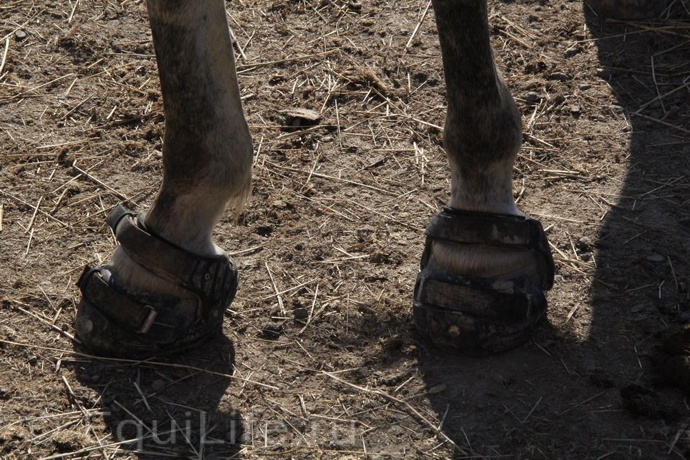 Фоторепортаж: Конюшня на юге Норвегии - фото IMG_4583_wm, главная Конюшня Пастбище Содержание лошади , конный журнал EquiLIfe