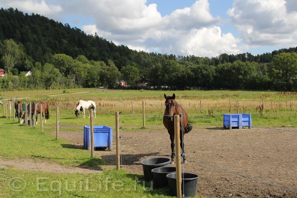 Фоторепортаж: Конюшня на юге Норвегии - фото IMG_4587_wm, главная Конюшня Пастбище Содержание лошади , конный журнал EquiLIfe