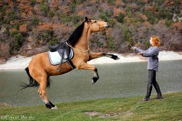 """""""На полном доверии"""". Интервью с частным коневладельцем Ксенией Урчуковой - фото RS45pqZ-dGs2_wm, главная Интервью Разное Тренинг , конный журнал EquiLIfe"""