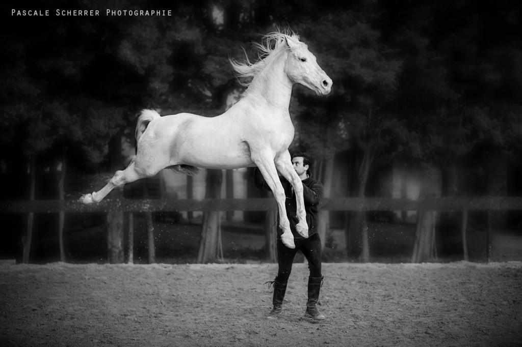 Винсент Либератор (Vincent Liberator) - фото 14258836-1024x682, главная Конные истории Разное , конный журнал EquiLIfe