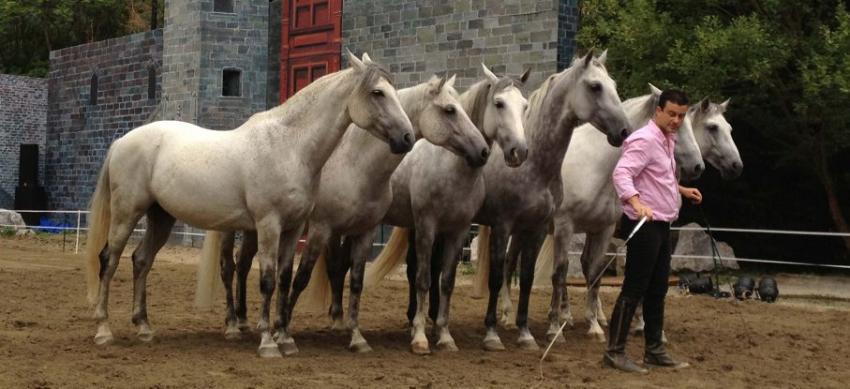 Винсент Либератор (Vincent Liberator) - фото 201309111112-full-1, главная Конные истории Разное , конный журнал EquiLIfe