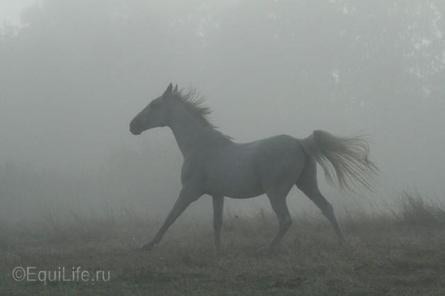 """Боли в спине: """"целующиеся позвонки"""" - фото 28-СЕНТЯБРЯ-039_wm, главная Здоровье лошади , конный журнал EquiLIfe"""