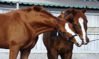 Фото: thehorse.com