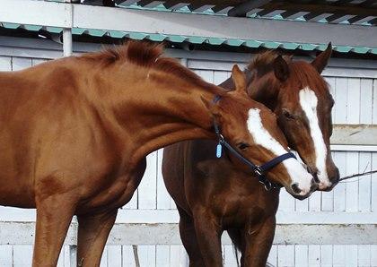 Обучение навыку через наблюдение у лошадей - фото 7126_3183, главная Поведение лошади Тренинг , конный журнал EquiLIfe