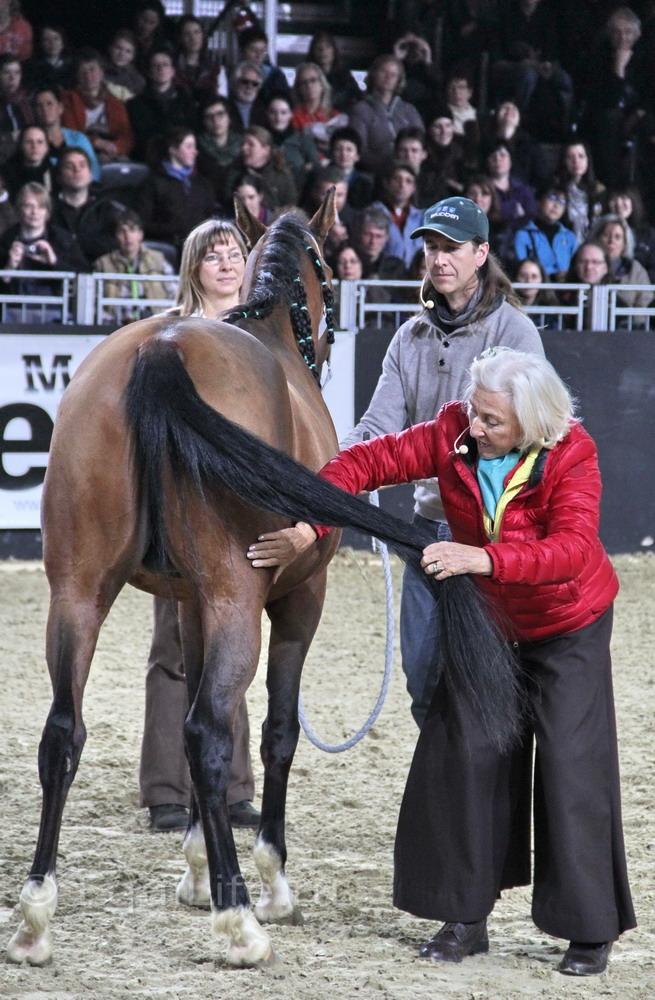Линда Теллингтон-Джонс: Слушать сердце - фото IMG_1057_wm, главная Здоровье лошади Интервью Линда Теллингтон-Джонс Поведение лошади , конный журнал EquiLIfe