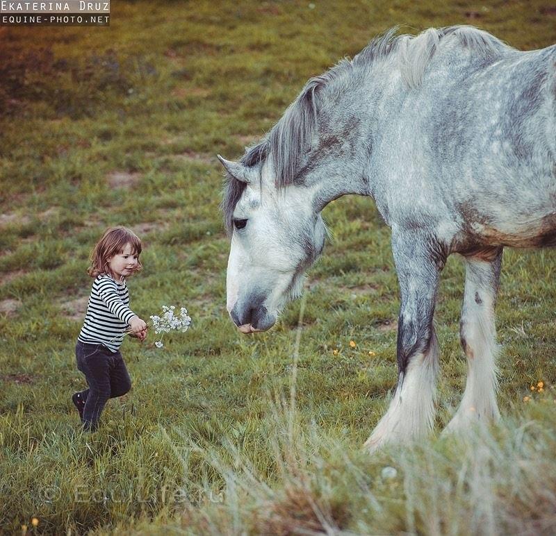"""""""Повелительница великанов"""" Интервью с частным коневладельцем Лилией Вайс.  - фото i-aRmFPX_3U, главная Интервью Конюшня Разное Содержание лошади , конный журнал EquiLIfe"""