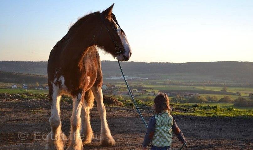 """""""Повелительница великанов"""" Интервью с частным коневладельцем Лилией Вайс.  - фото j5_t2yvexYM, главная Интервью Конюшня Разное Содержание лошади , конный журнал EquiLIfe"""