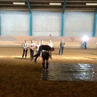 Фотоотчет: Конференция International Society for Equitation Science - фото 09-200x200, главная Здоровье лошади Новости Поведение лошади Тренинг , конный журнал EquiLIfe