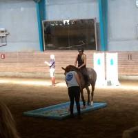 Фотоотчет: Конференция International Society for Equitation Science - фото 10-200x200, главная Здоровье лошади Новости Поведение лошади Тренинг , конный журнал EquiLIfe