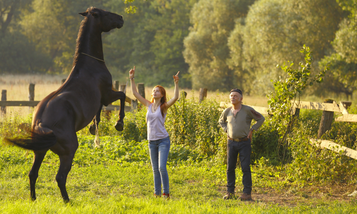 Работа без железа: статистический обзор умений лошадей (данные по Москве и Московской области) - фото Szenenbild_27700x420, главная Тренинг , конный журнал EquiLIfe