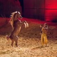 Фредерик Пиньон и Магали Дельгадо. Шоу Eqi Cheval Libre - фото 144-200x200, главная Разное Фредерик Пиньон и Магали Дельгадо , конный журнал EquiLIfe