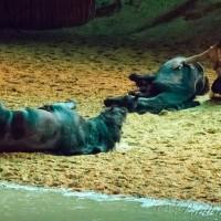 Фредерик Пиньон и Магали Дельгадо. Шоу Eqi Cheval Libre - фото 193-200x200, главная Разное Фредерик Пиньон и Магали Дельгадо , конный журнал EquiLIfe