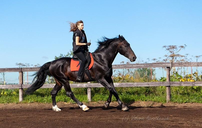 """Вебинар от """"Грамотной Свободы"""" - фото k_jUJ9u23Vs, Новости , конный журнал EquiLIfe"""