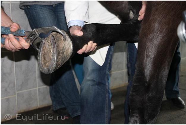 Диагностика хромоты - фото 01_wm, главная Здоровье лошади Разное Содержание лошади , конный журнал EquiLIfe