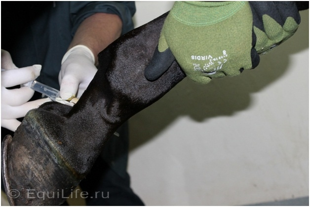 Диагностика хромоты - фото 03_wm, главная Здоровье лошади Разное Содержание лошади , конный журнал EquiLIfe