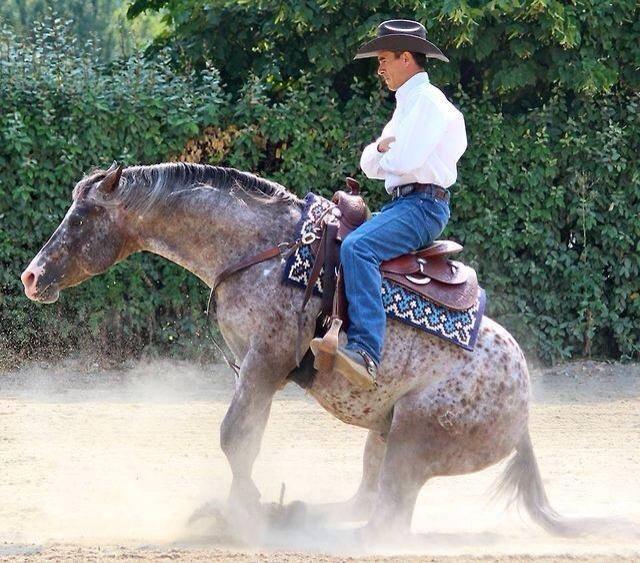 Феминизация конной отрасли, или почему на конюшнях только девушки - фото 10455044_666886643386150_9087147319374707636_n, главная Конные истории Разное , конный журнал EquiLIfe
