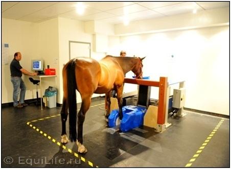 Диагностика хромоты - фото 10_wm, главная Здоровье лошади Разное Содержание лошади , конный журнал EquiLIfe