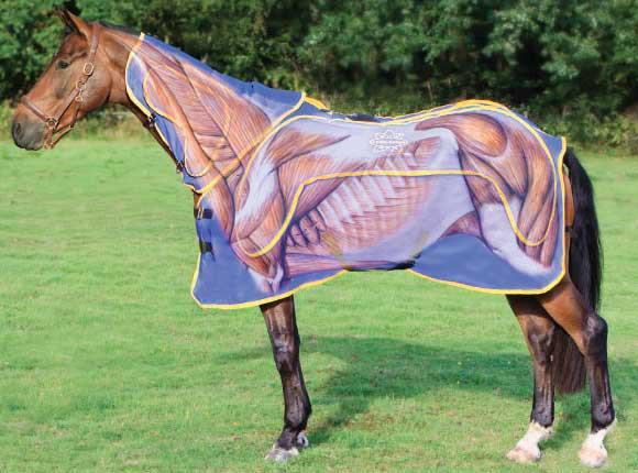 Конь в пальто: как подобрать попону? - фото 577964_431462953612520_1993613135_n, главная Здоровье лошади Содержание лошади , конный журнал EquiLIfe