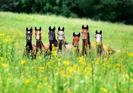 Совместный выпас жеребцов возможен! - фото largtyte, главная Пастбище Поведение лошади Содержание лошади , конный журнал EquiLIfe