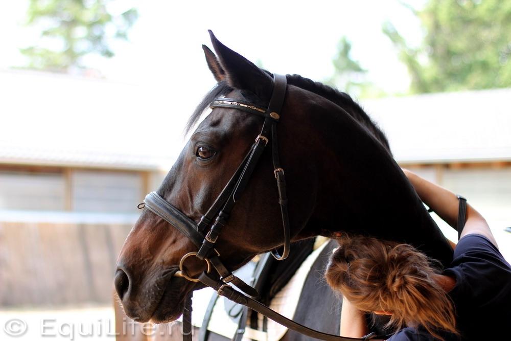 Диагностика хромоты - фото s-097_wm, главная Здоровье лошади Разное Содержание лошади , конный журнал EquiLIfe