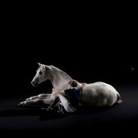 Animo Italia: коллекция-2014 в фотокаталоге - фото -200x200, главная Разное Фото , конный журнал EquiLIfe