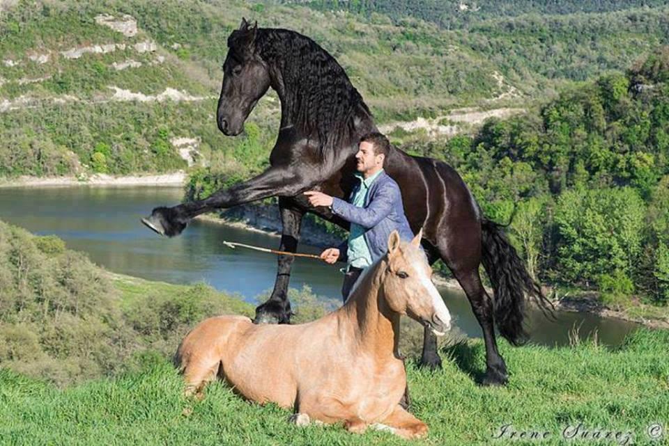 Санти Серра (Santi Serra) - фото 10646723_588336444621713_5534879635168166974_n, главная Конные истории Разное , конный журнал EquiLIfe