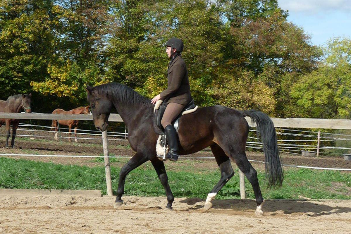 Филип Колош - фото 468826_488538174552282_542165691_o, главная Конные истории Разное , конный журнал EquiLIfe