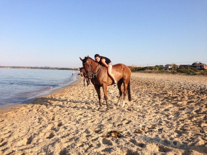 В туманах Австралии - фото LJqvIPPjfRU, главная Интервью Разное , конный журнал EquiLIfe