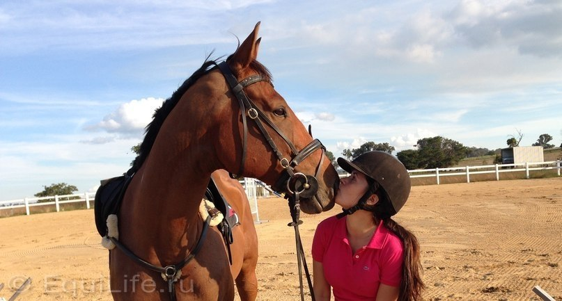 В туманах Австралии - фото QIFhMjzNiNc, главная Интервью Разное , конный журнал EquiLIfe