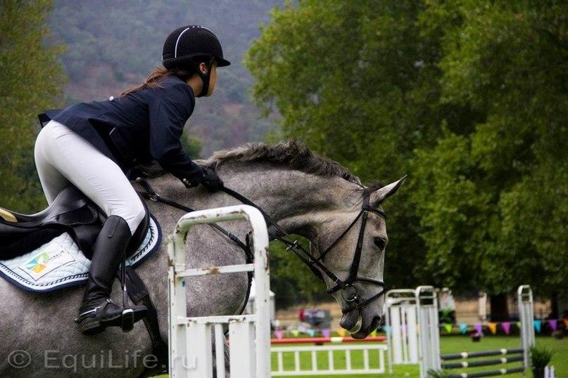 В туманах Австралии - фото VcyYR1ZqIl0, главная Интервью Разное , конный журнал EquiLIfe