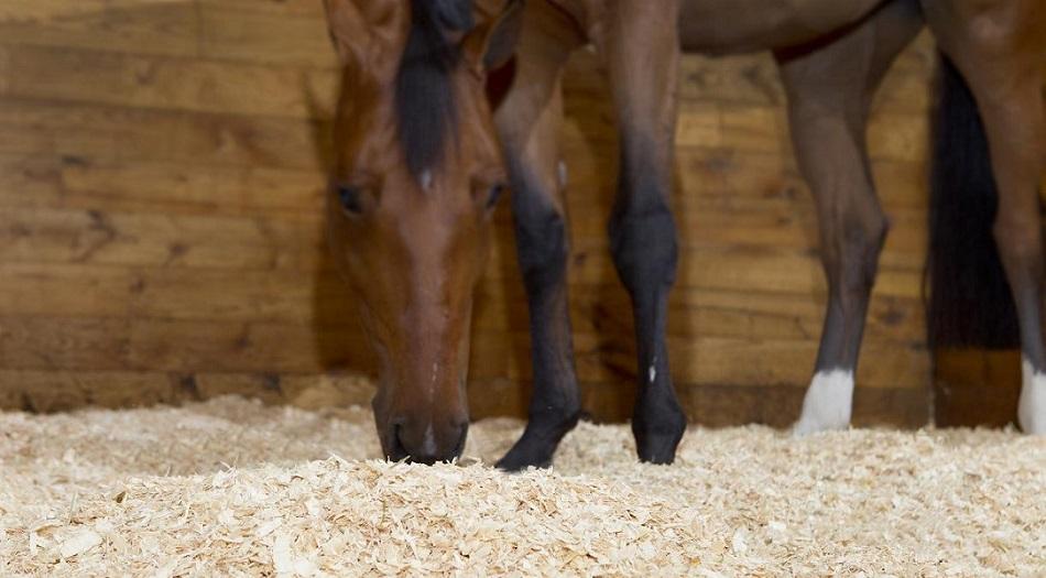 Ложе для коня: выбираем подстилку - фото Website-Photo-3-resized1, главная Конюшня Содержание лошади , конный журнал EquiLIfe