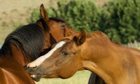 Фото: ecoliciousequestrian.com