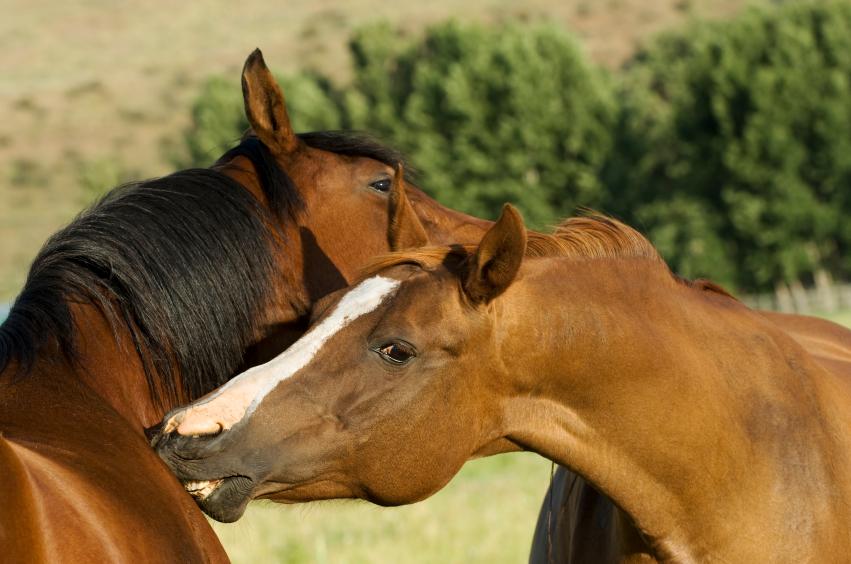 Почёсывания или похлопывания? - фото ecoliciousequestrian-com, главная Разное Тренинг , конный журнал EquiLIfe