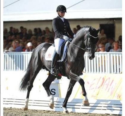 Что готовит EQUITANA 2015 - фото se, главная Новости Разное , конный журнал EquiLIfe