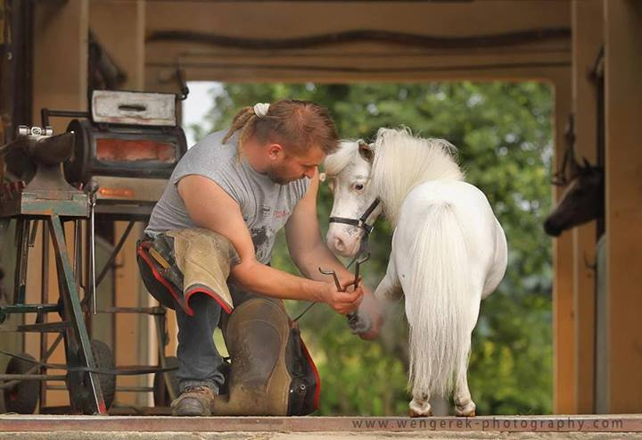 Ещё раз про счастье и благополучие лошади  - фото 10505590_672852882806858_6021059801155157515_n, главная Здоровье лошади Конюшня Разное Содержание лошади , конный журнал EquiLIfe