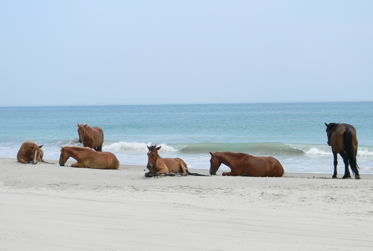 Ещё раз про счастье и благополучие лошади  - фото 3830678f0271a20ed0487d1de1aa7177, главная Здоровье лошади Конюшня Разное Содержание лошади , конный журнал EquiLIfe