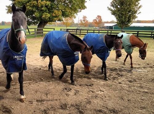 Ещё раз про счастье и благополучие лошади  - фото e417effc122611e2868c12313817a130_7_large, главная Здоровье лошади Конюшня Разное Содержание лошади , конный журнал EquiLIfe