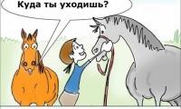 Рисунок: fannyhorsecartoonc.com & equilife.ru