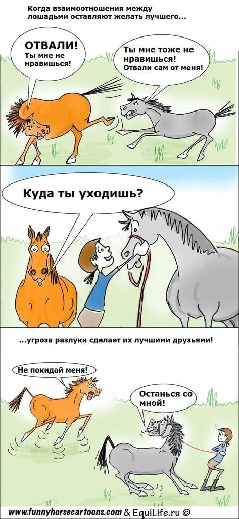 Стабунивание - фото iOubP5qDozY_wm, Интересное о лошади Разное , конный журнал EquiLIfe