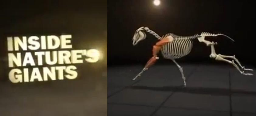 Анатомия скаковой лошади на Viasat Nature - фото inside, Новости , конный журнал EquiLIfe