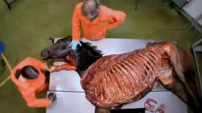 Анатомия скаковой лошади на Viasat Nature - фото inside2, Новости , конный журнал EquiLIfe