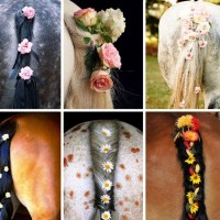 Лошадиные причёски - фото 2-200x200, Skin Care главная Интересное о лошади Лошадь Разное , конный журнал EquiLIfe