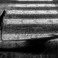Антуан Бассале (Antoine Bassaler) - фото 10273389_282582918566600_3353591423191433770_o-200x200, главная Разное Фото , конный журнал EquiLIfe