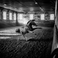 Антуан Бассале (Antoine Bassaler) - фото 10353267_286525574839001_9122475987509323570_o-200x200, главная Разное Фото , конный журнал EquiLIfe