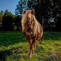 Антуан Бассале (Antoine Bassaler) - фото 1381953_220960441395515_510864725_n-200x200, главная Разное Фото , конный журнал EquiLIfe
