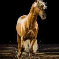 Антуан Бассале (Antoine Bassaler) - фото 1538811_274192562738969_1083246751_n-200x200, главная Разное Фото , конный журнал EquiLIfe